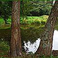 Lac 11101510