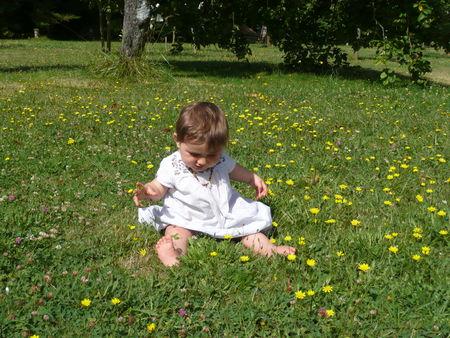 Cl_mence_et_fleurs_jaunes_29_juillet_2008