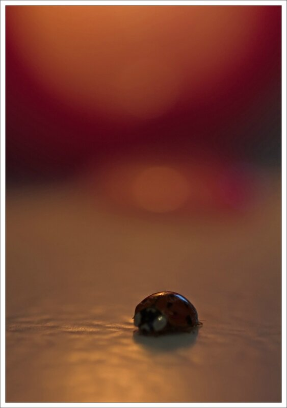 coccinelle bougie 1 060115