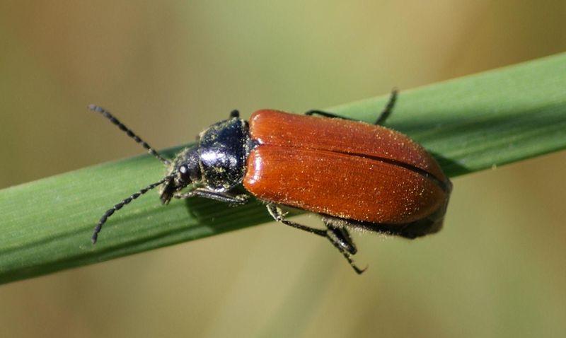 Insecte cuisine marron divers besoins de cuisine - Insecte vert volant ...