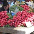 Biggest Radishes I've Ever Seen!