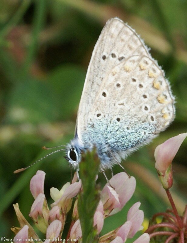 LFB papillon près