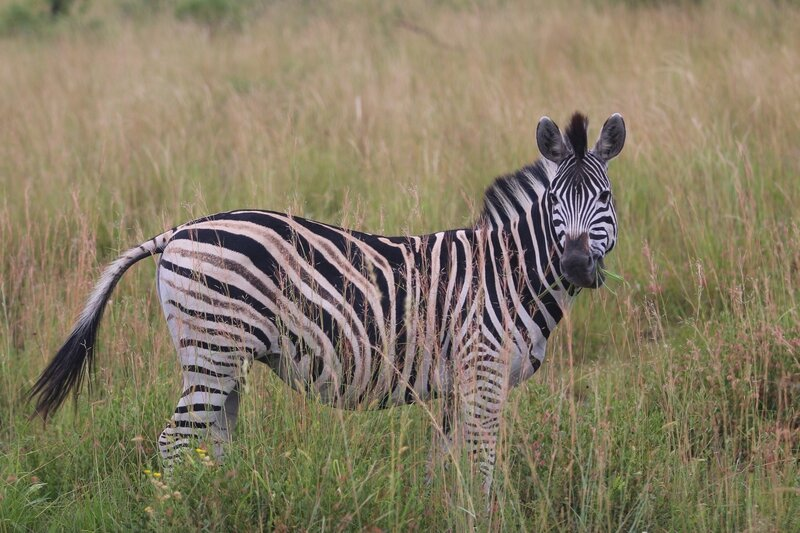 Parc du Pilanesberg