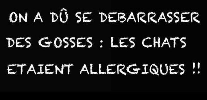 allergie chats