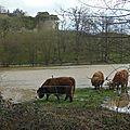 2014 02 inondation 058