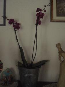 27mars2011_044