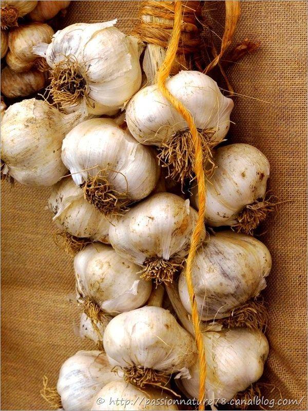 Les légumes d'autrefois (5)