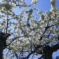 Le printemps est là ....