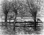 PIET-MONDRIAN-FARMYARD-WIYH-CATTLE-AND-WILLOWS-Thumbnail