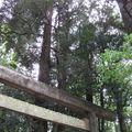 jap2009 558