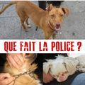 Grande manifestation contre le trafic d'animaux a paris