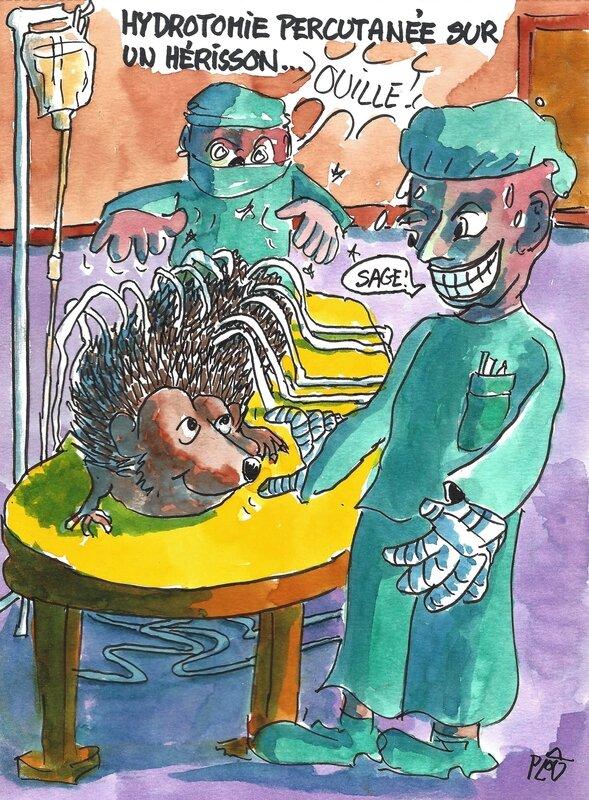 Hydrotomie sur un hérisson