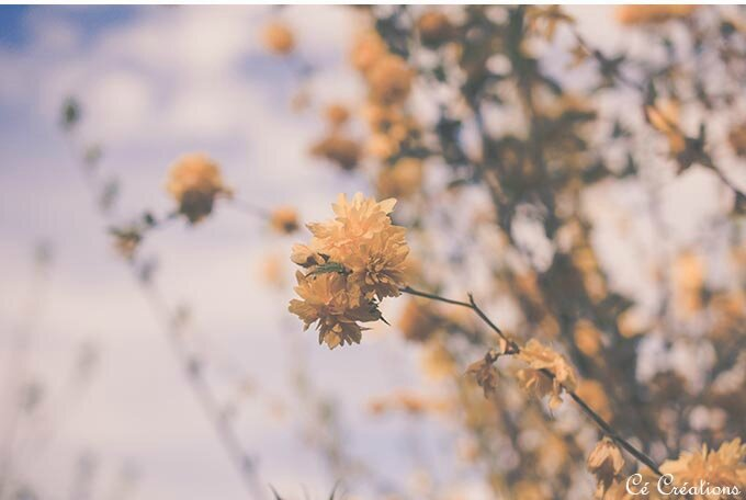 fleurs_jardin-3