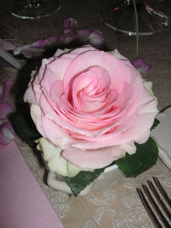 table_rose_f_te_des_m_res_011
