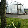 15 avril - je suis une petite gâtée...avec une serre, un jardin et un potager