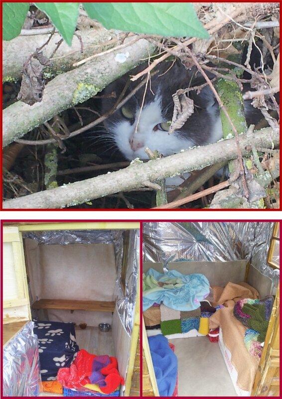 chat enclos et cabane isolée nov 15
