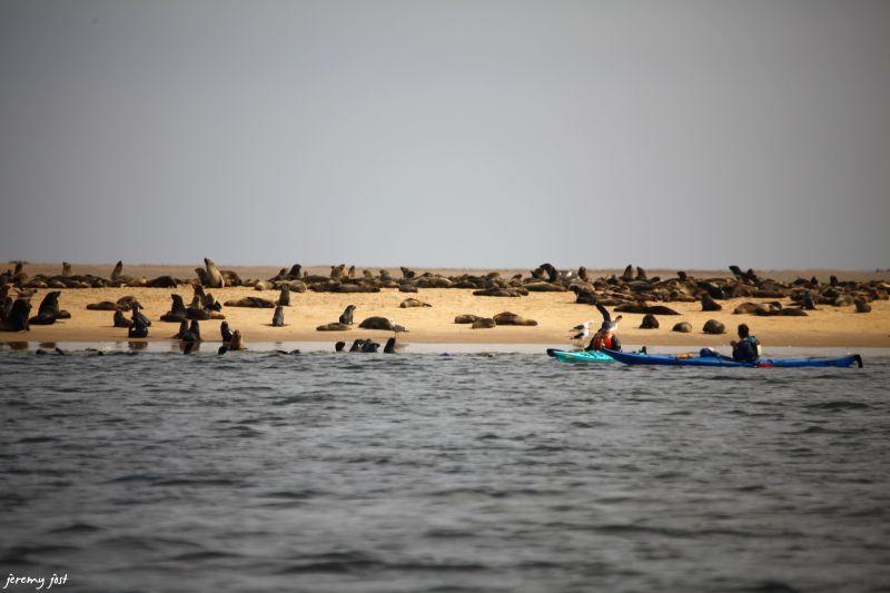 kayak and seals