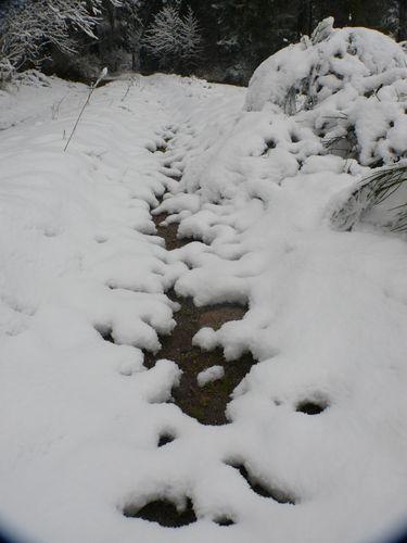 2008 10 29 Magnifique neige fraiche