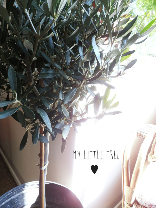 my_little_tree
