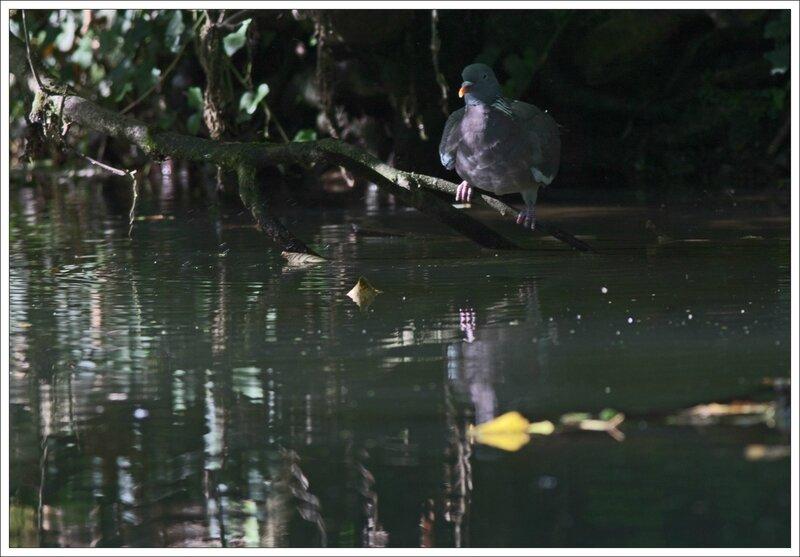 ville riviere palombe boit 4 160914