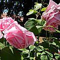 Windows-Live-Writer/jardin-charme_12604/DSCN0587