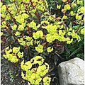 Club des cinq jaunes au jardin