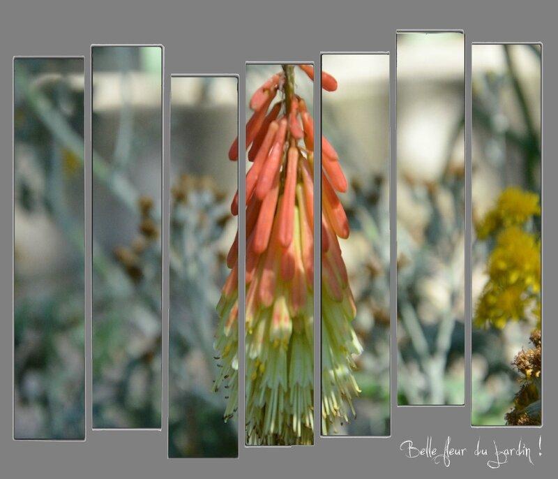 Montage belle fleur