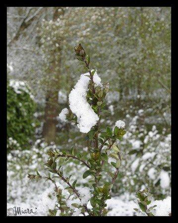neige1noir