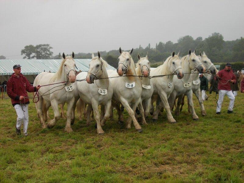 Bande de 7 poulinières de l'Elevage du Boncoin - Concours National - 26 Juillet 2015