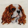 kingCharles10