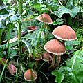 Végétaux champignons petits sous bois macro 800x600