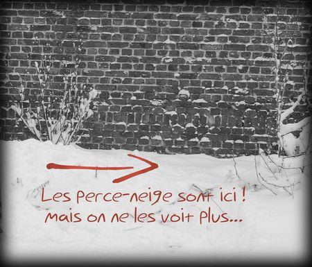 perce neige NB