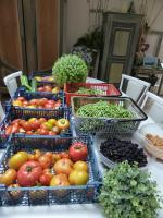 13-tomates, haricots, framboises, mûres, concombres, courgettes (1)