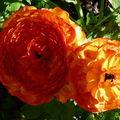 En ANDALOUSIE/Espagne 1, Flore & Faune