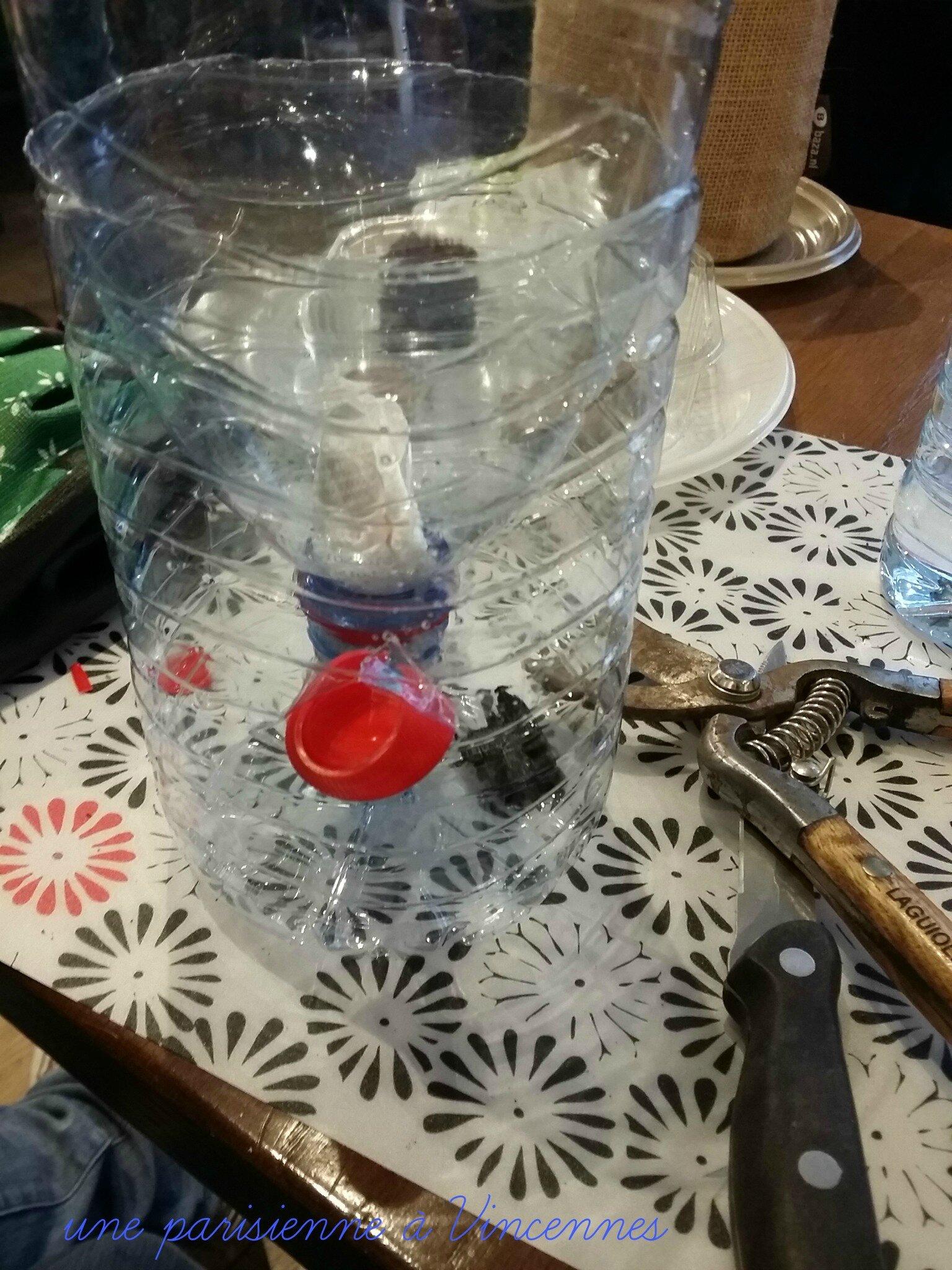 faire pousser des l gumes et aromates dans une bouteille en plastique diy une parisienne. Black Bedroom Furniture Sets. Home Design Ideas