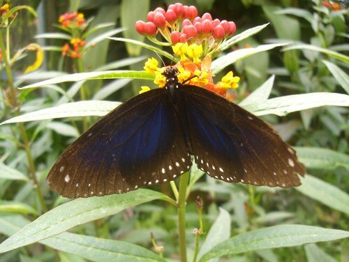 Cameron Highlands, butterfly farm