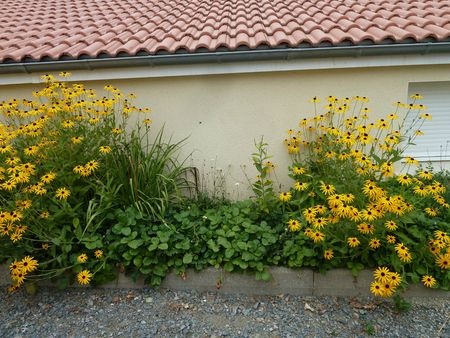 potager fleuri 23 aout (7)