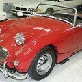 AUSTIN HEALEY - Frogeye