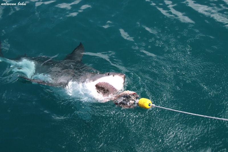 shark attack 1