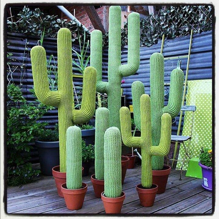 cactus geants simples et triples