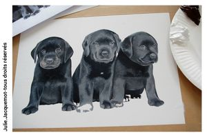 chiots_labs_julie_jacquemot_facebook_etape03 copie