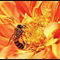 Les abeilles meurent, mais la relève est assurée : les robobees débarquent !