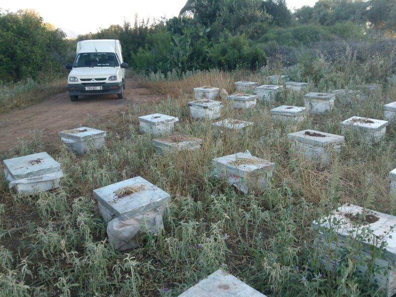 apicultura (486)