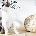 Un panier, des chats