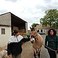 Elise poursuit ses séances d'équitation à neuilly-sur-marne