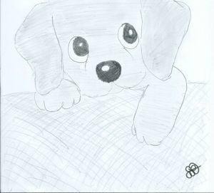 petit chien un amour de dessin. Black Bedroom Furniture Sets. Home Design Ideas