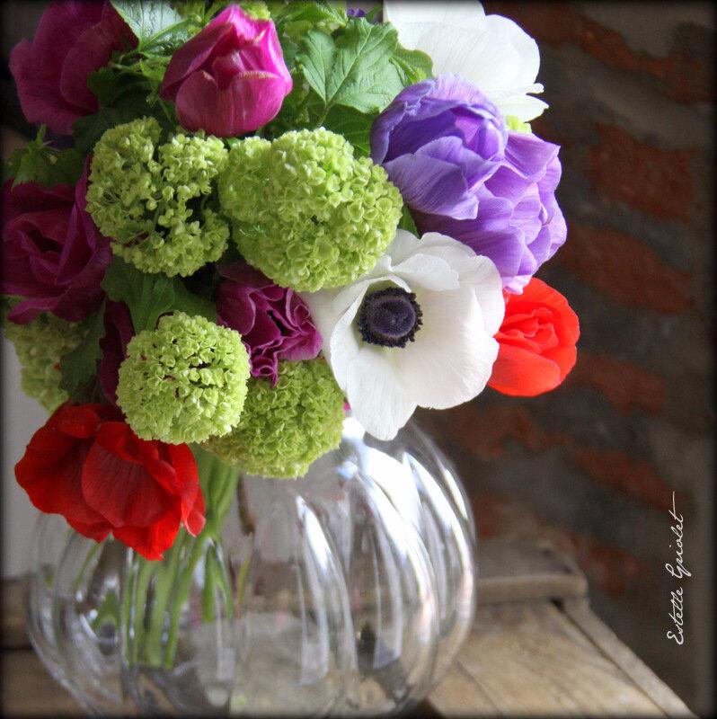 Anémones multicolores (7)