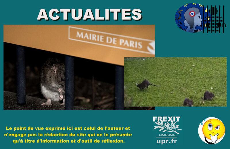 ACT RATS