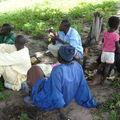 La région des nyayes et ses cultures....
