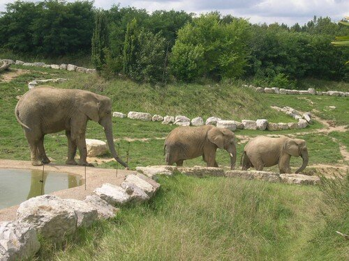 Zoo St Aignan